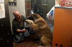 Man Vacuuming Hair of his Dog